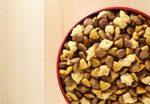 Photo of dog food