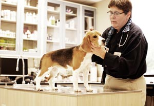 Photo of dog and veterinarian